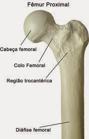 imagem cabeça do femur