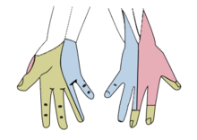220px-Gray812and814_hand